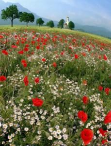 Spring_mountain_meadow